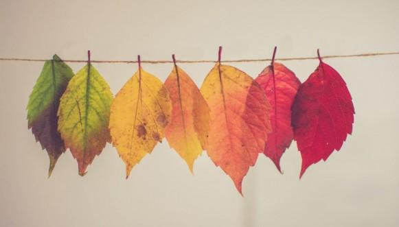 L'automne à Mitis
